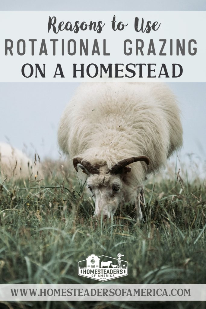 Reasons to Use Rotational Grazing on the Homestead