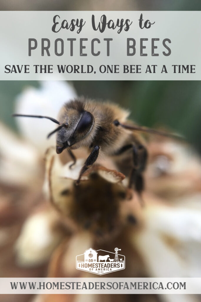 Easy Ways to Protect Bees