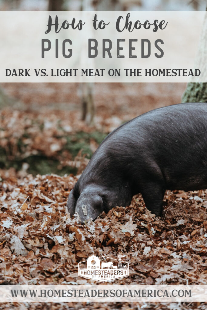 Choosing a Pig Breed on the Homestead