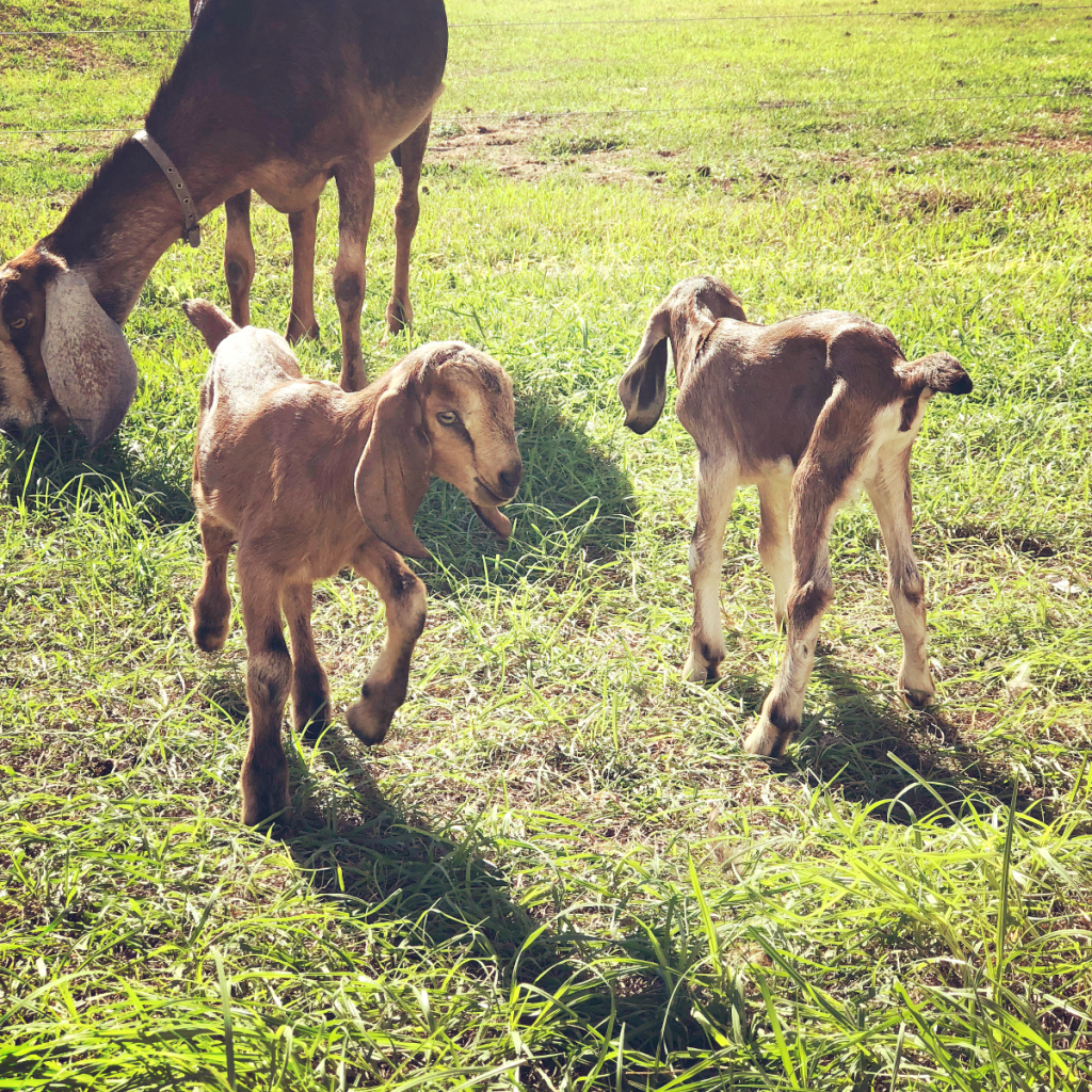 5 Reasons Why the Homesteading Lifestyle is Awesome : Baby Animals