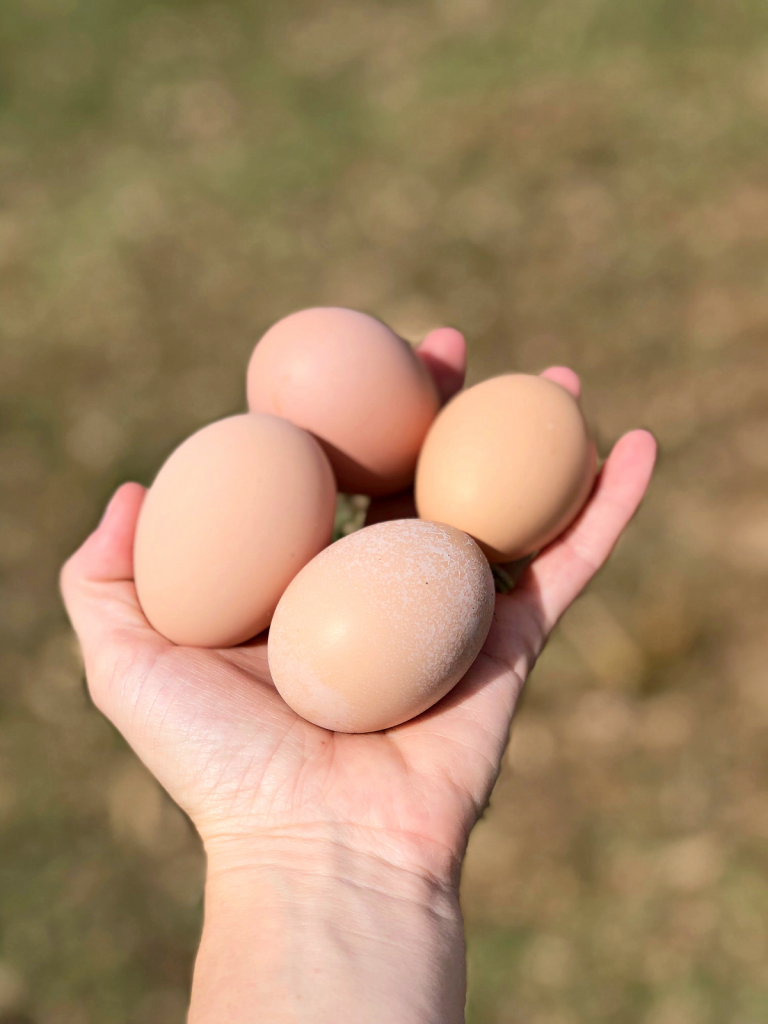 5 Reasons Why the Homesteading Lifestyle is Awesome : Fresh Eggs