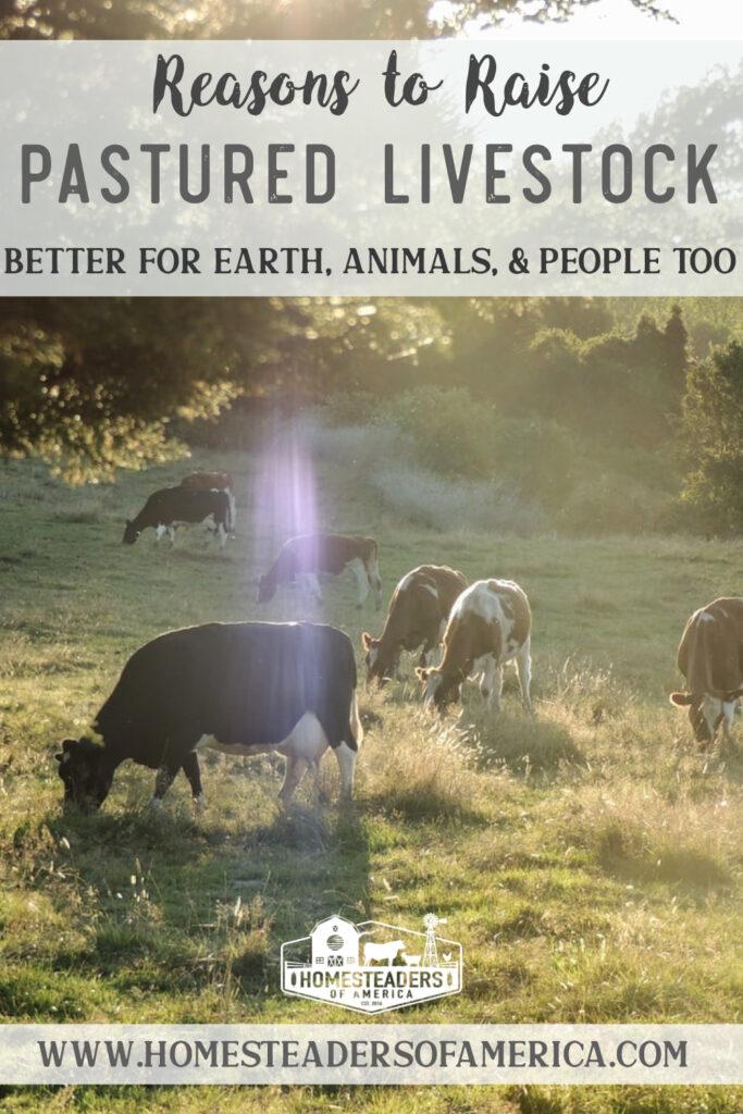 9 Reasons to Raise Pastured Livestock