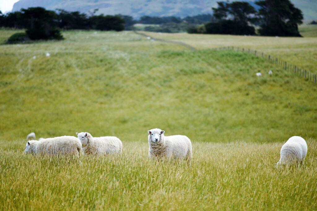 Reasons to Raise Livestock on Pasture