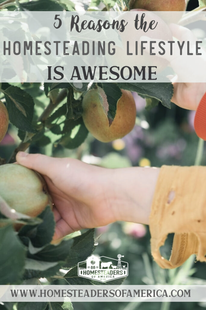 5 Reasons the Homesteading Lifestyle is Awesome