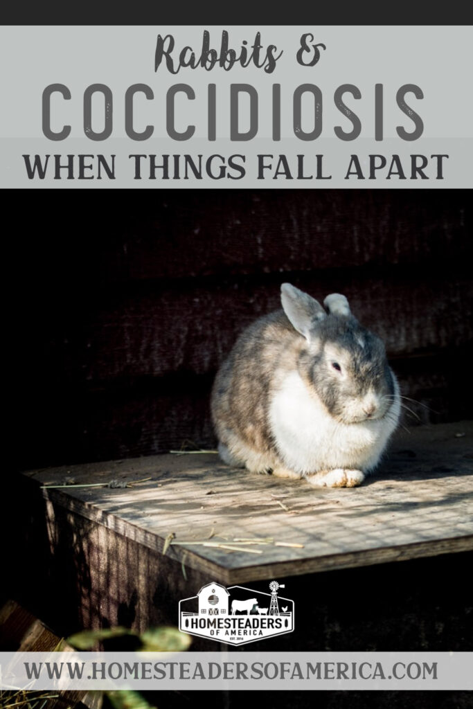 Rabbits & Coccidiosis: When Things Fall Apart
