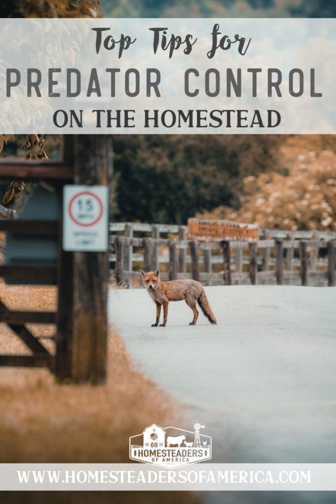 Predator Control on the Homestead