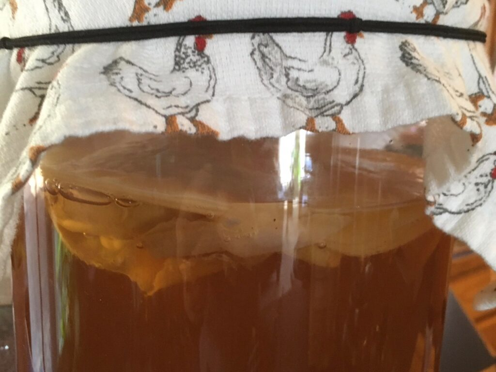 continuous scoby for brewing kombucha brew kombucha