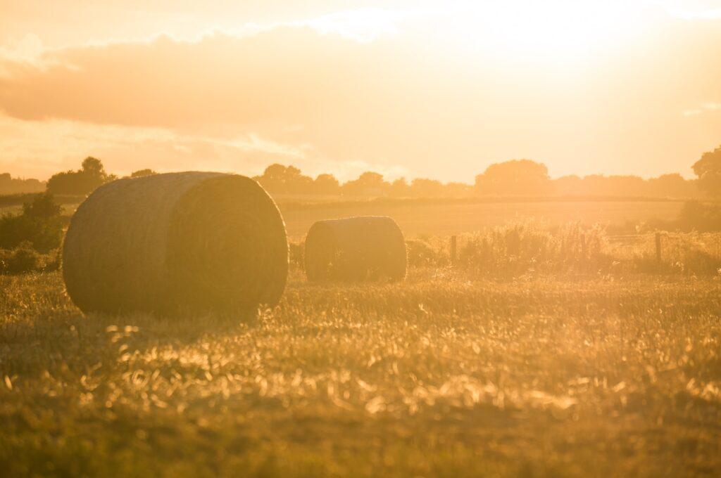 Hay Bales in Field