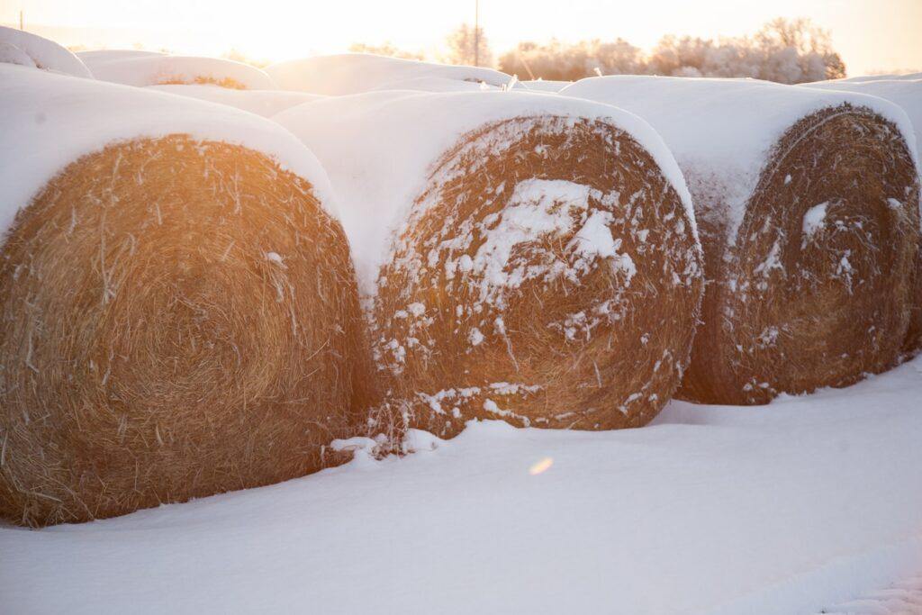Winter Homestead Organization