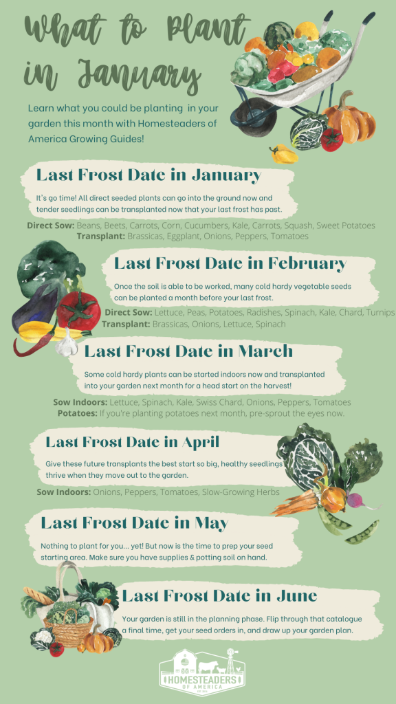 What to Plant in January: Vegetable Garden Growing Guide