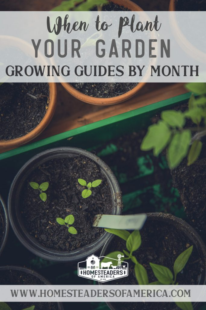 When to Plant Your Garden Monthly Growing Guides