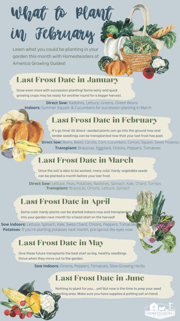 What to Plant in February: Vegetable Growing Guide