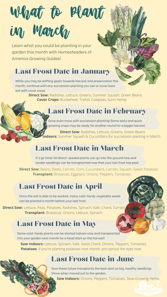 What to Plant in Your Vegetable Garden in March