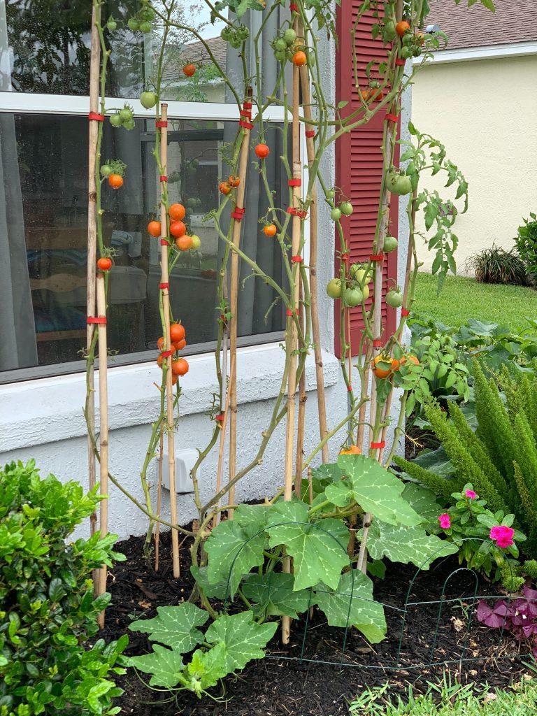 Suburban Vertical Garden