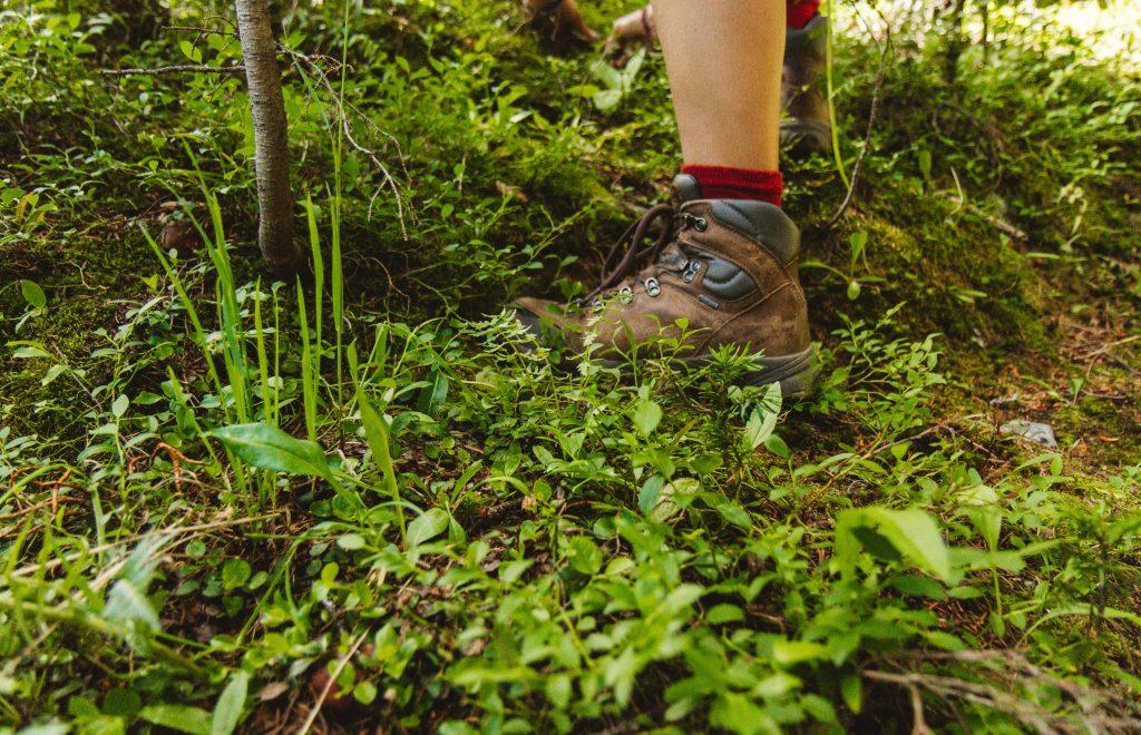 Understanding Wild Herbs and Edibles
