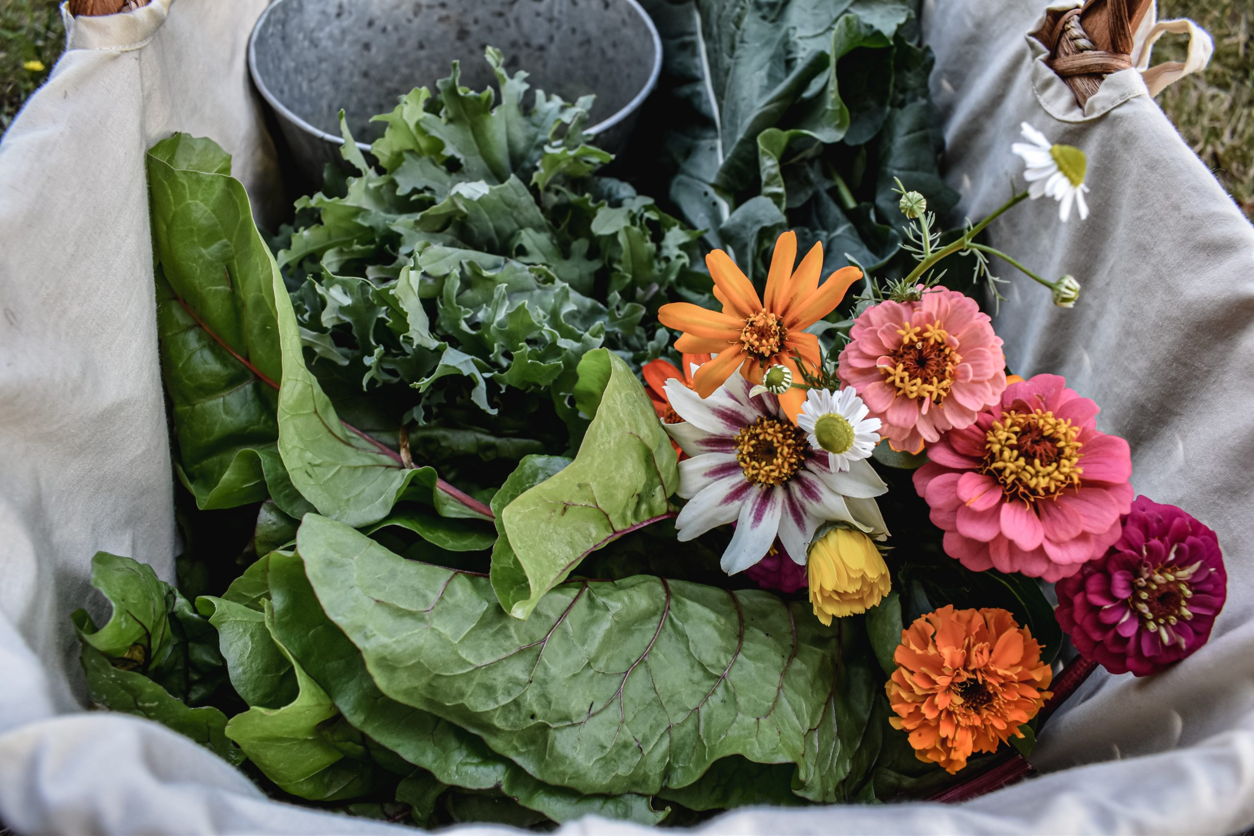 What to Plant in May: Vegetable Growing Guide