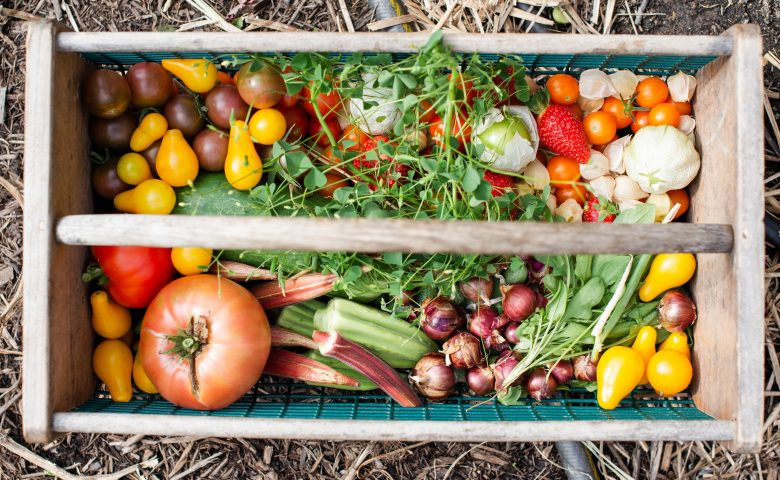 What to Plant in August: Vegetable Growing Guide