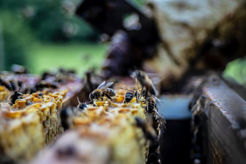 Beginner Beekeeper Tips