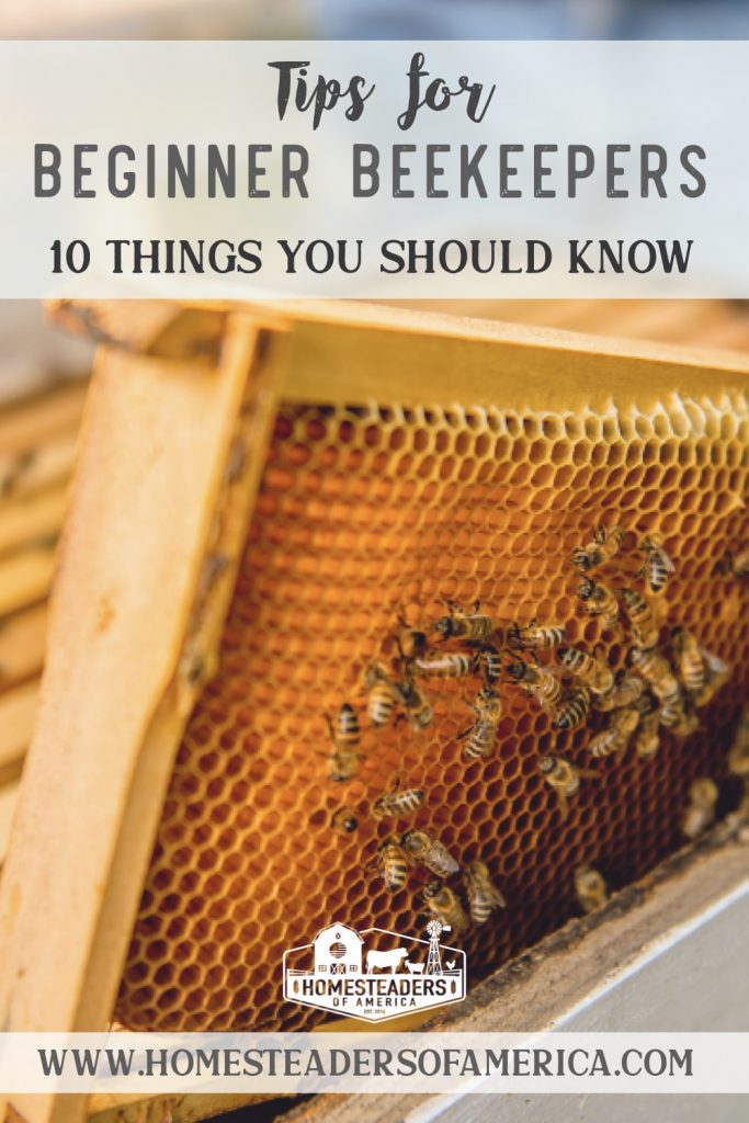 10 Tips for Beginner Beekeepers To Know