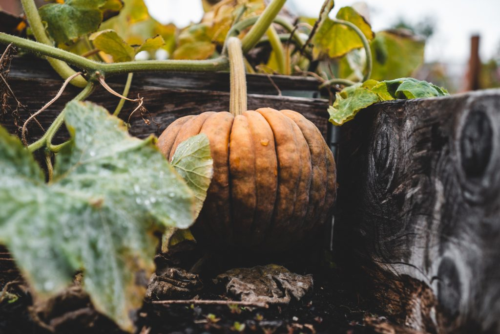 What to Plant in October Vegetable Garden