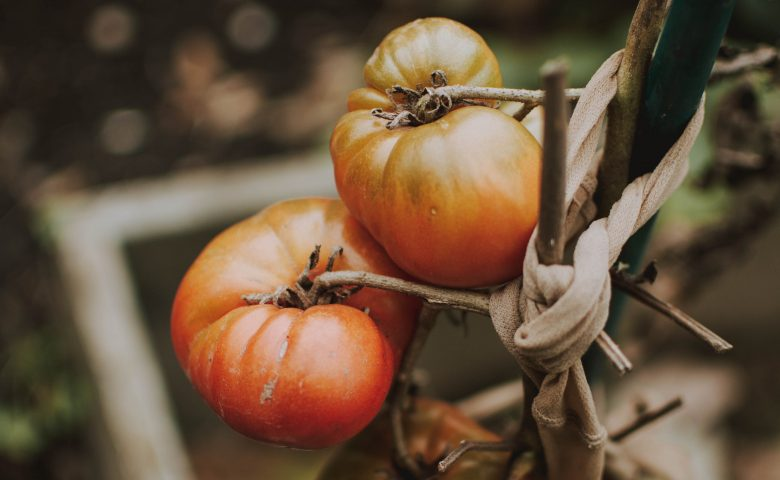 What to Plant in September Vegetable Garden
